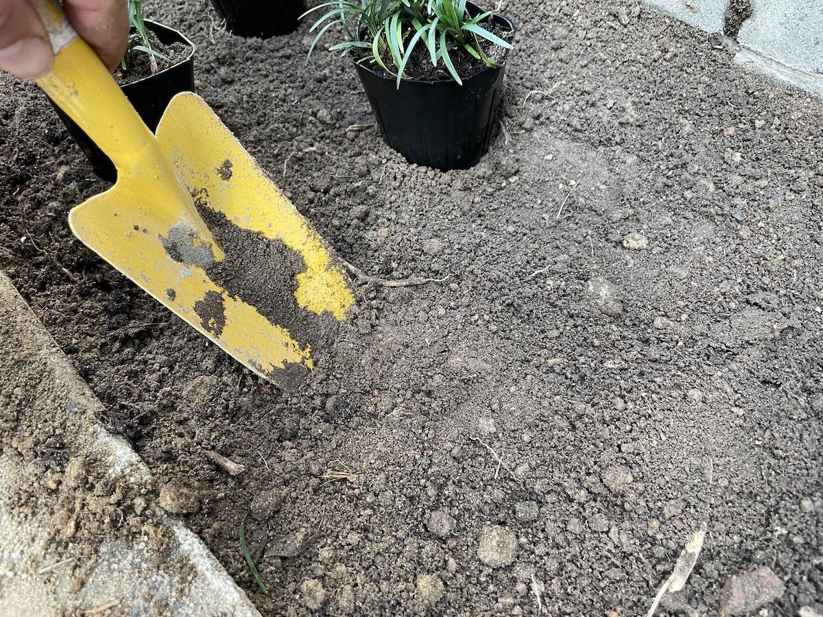 タマリュウを植えるための穴掘り