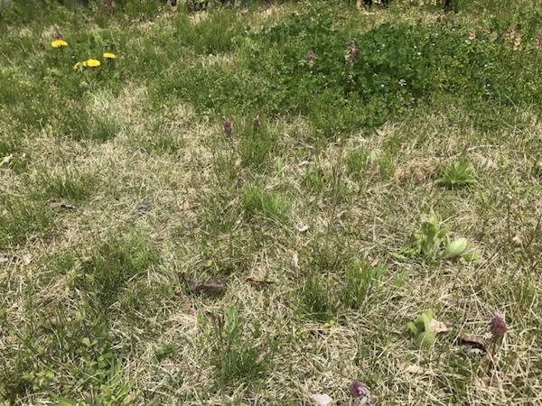 雑草が生えたお庭
