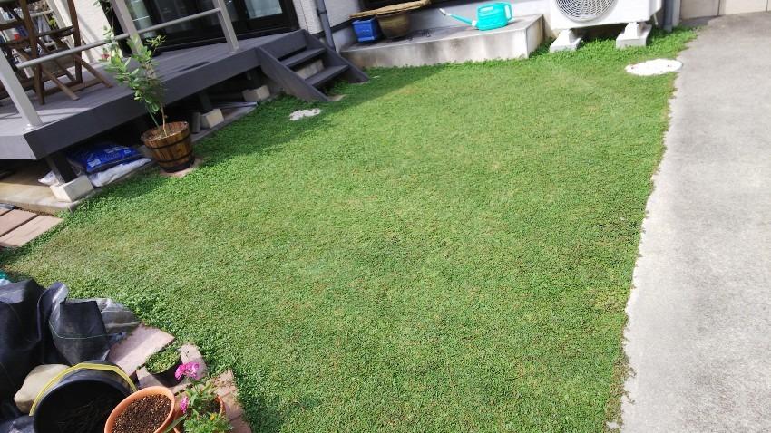 植栽シート併用クラピアを植えたお庭の写真
