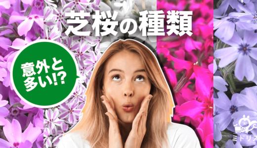 芝桜(シバザクラ)の種類|花言葉や品種ごとの特徴を写真付きで解説