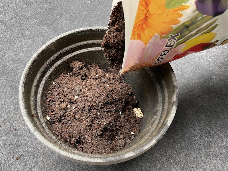 芝桜(シバザクラ)を植え付けるプランター(鉢植え)に培養土を入れている風景
