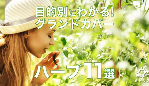 【お庭に植える目的別】グランドカバー向けハーブのおすすめ11選
