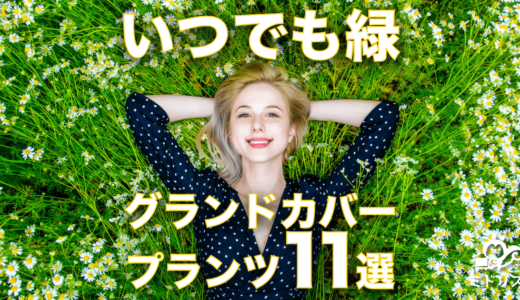 【お庭に植える目的別】常緑のグランドカバープランツおすすめ11選