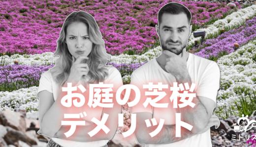 芝桜の6つのデメリット|失敗して枯れる原因と回避方法を徹底解説!
