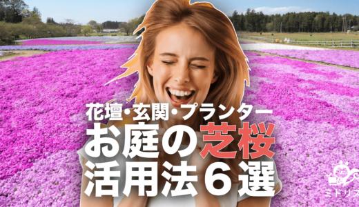 お庭での芝桜活用法6選|おすすめの理由と注意点【花壇・プランター・玄関もOK】